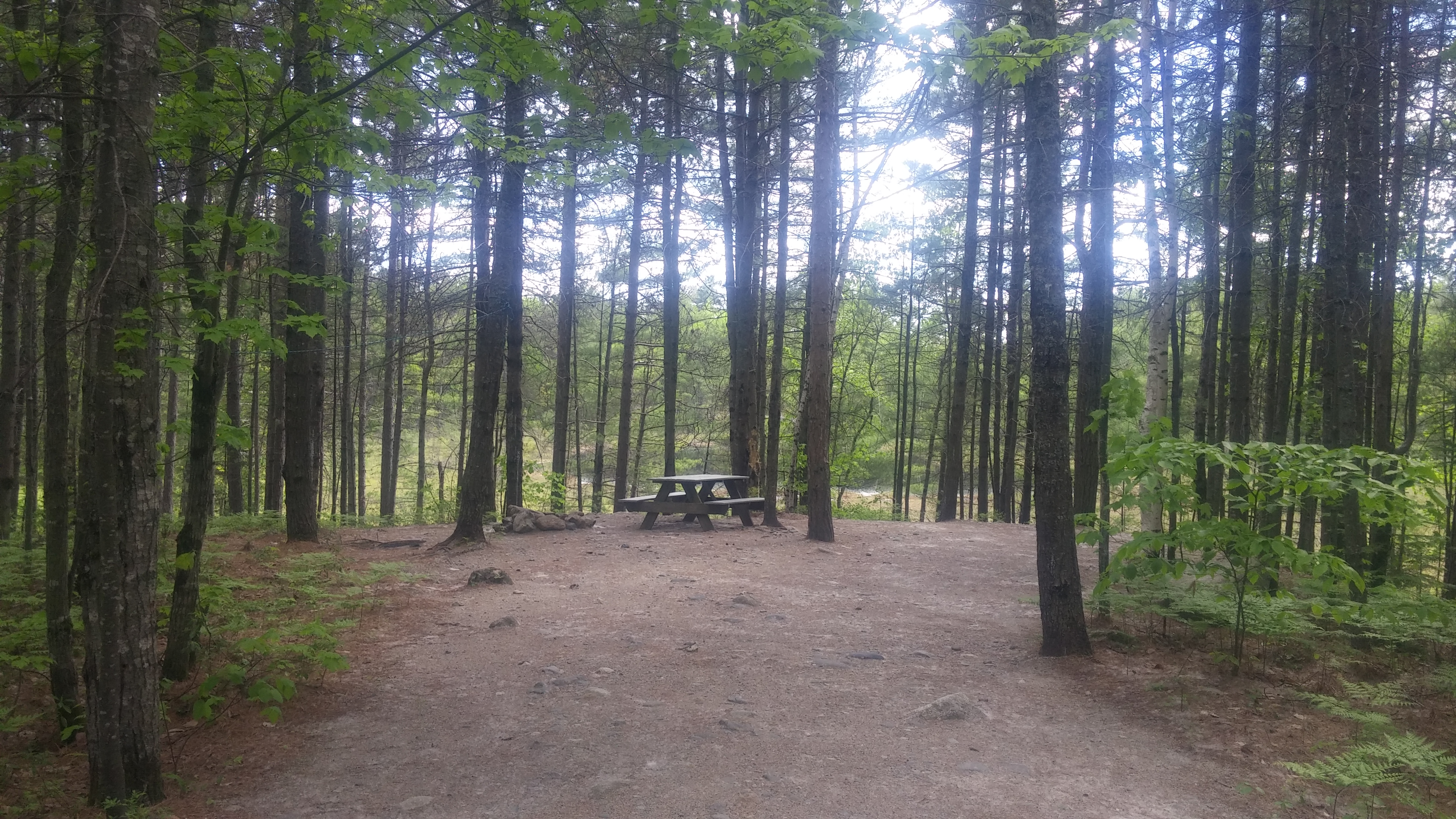 Site 1A, picnic table